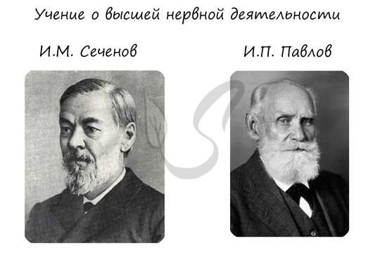 И.М. Сеченов и И.П. Павлов