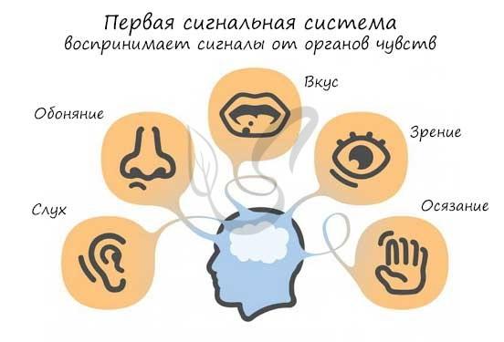 Первая сигнальная система