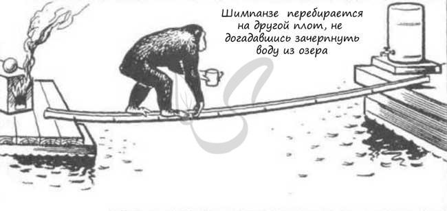 Опыт с обезьянами на плоту