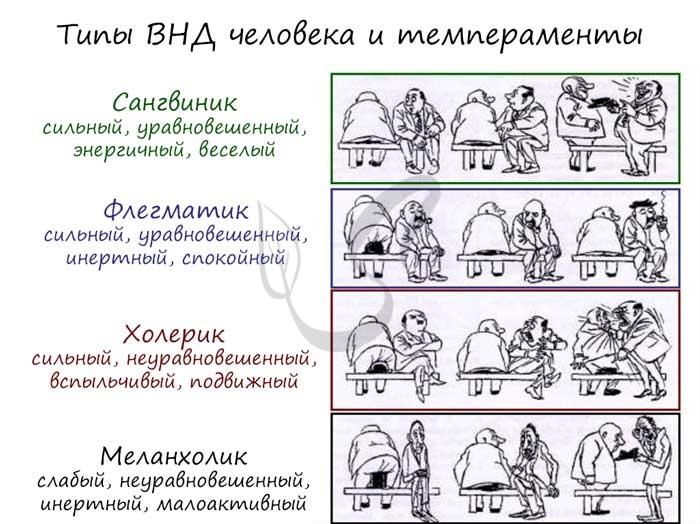 Типы темпераметов человека