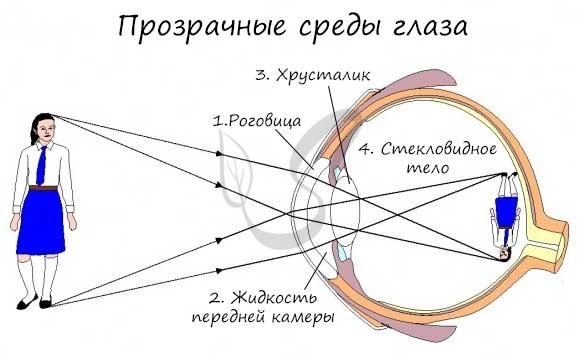 Прозрачные среды глаза