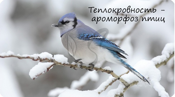 Пример ароморфоза - теплокровность у птиц