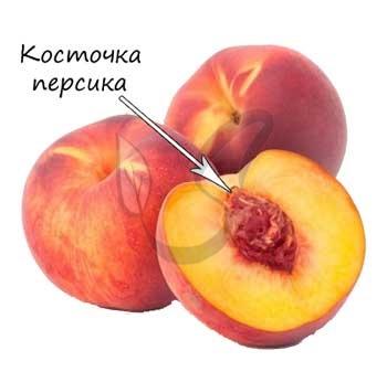Однокостянка персика