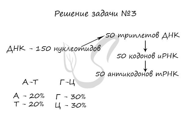 Задача на транскрипцию и трансляцию