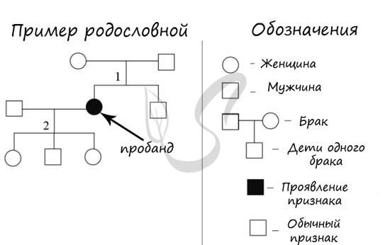 Правила написания родословной