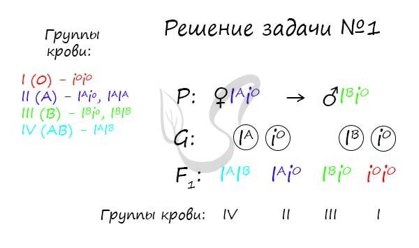 Примеры решения задач по группам крови примеры решения задачи по делфи