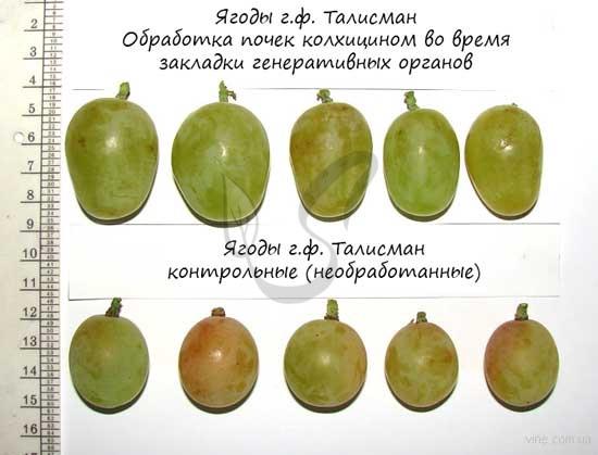 Полиплоидия у растений