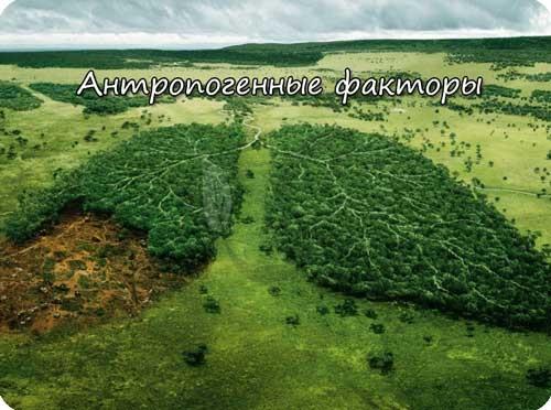 Антропогенные факторы экосистемы