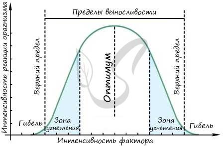 Закон оптимума
