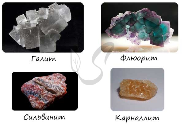 Галит, флюорит, сильвинит и карналлит
