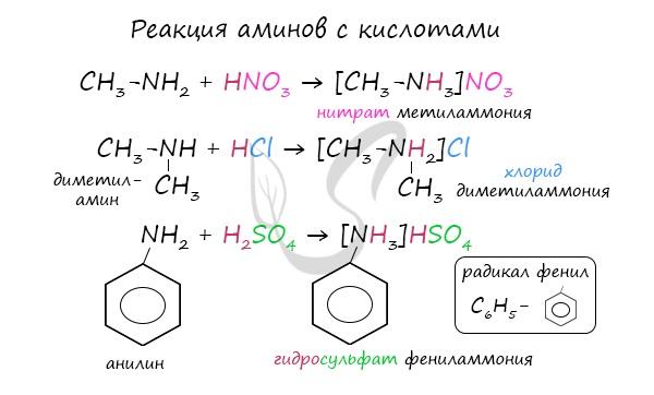 Реакции аминов с кислотами