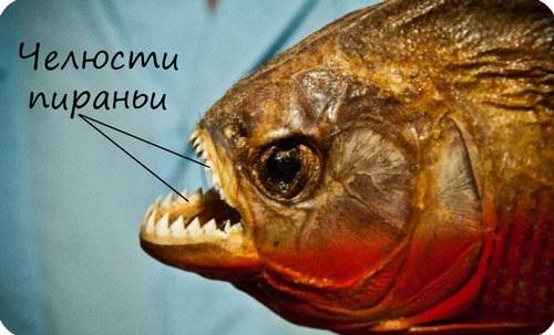 Челюсти рыб