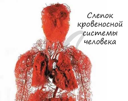 Слепок кровеносной системы
