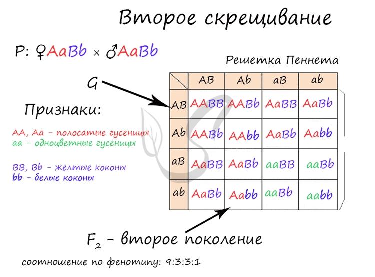 Задание ЕГЭ по биологии